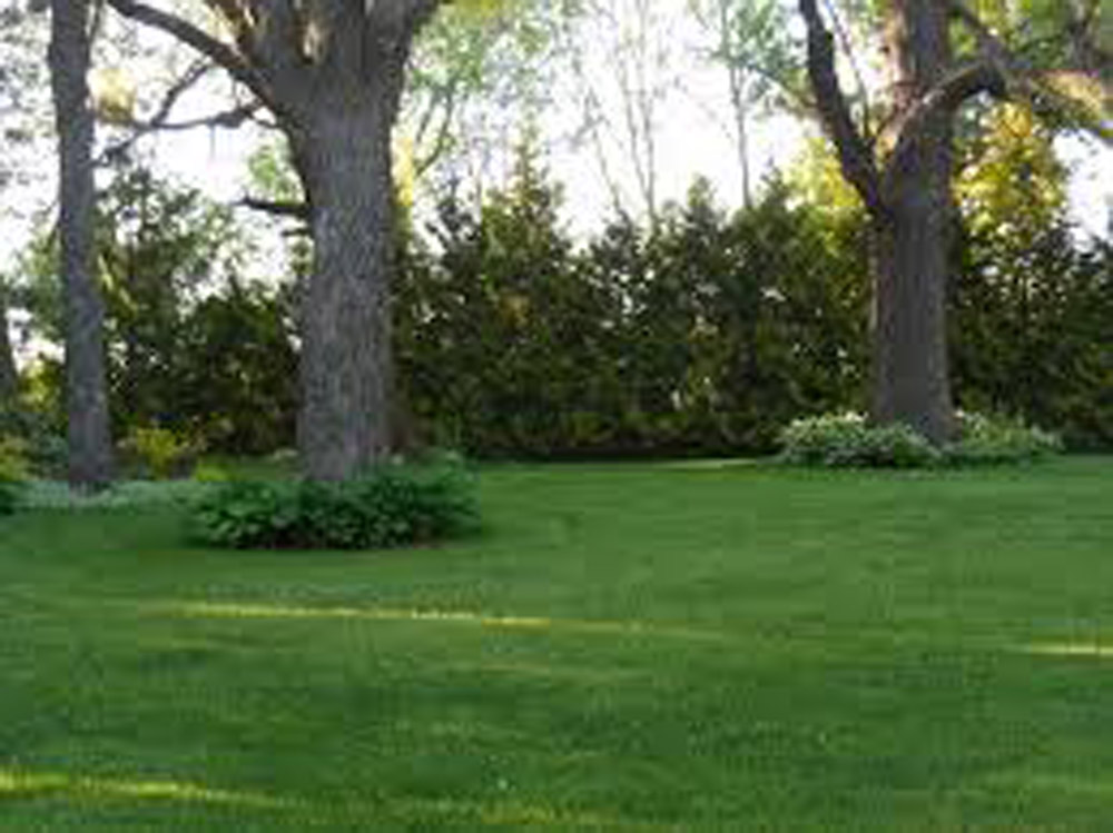 """Featured image for """"Shady Lawn"""""""