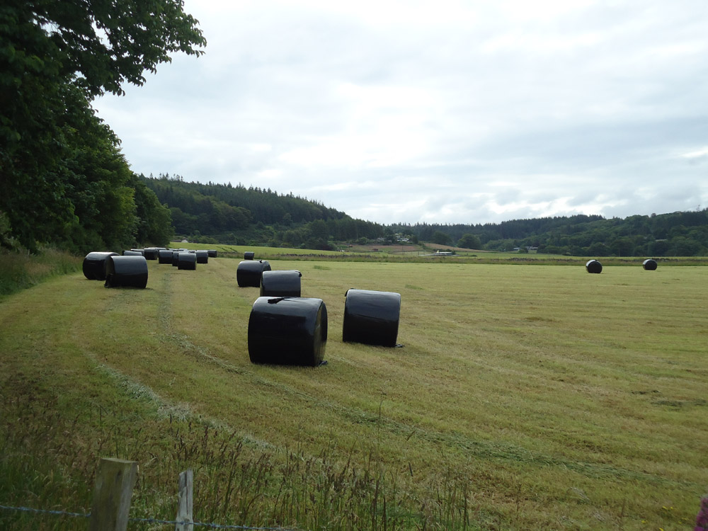 """Featured image for """"2-3 Year Silage Mix Plus Soil Improver"""""""
