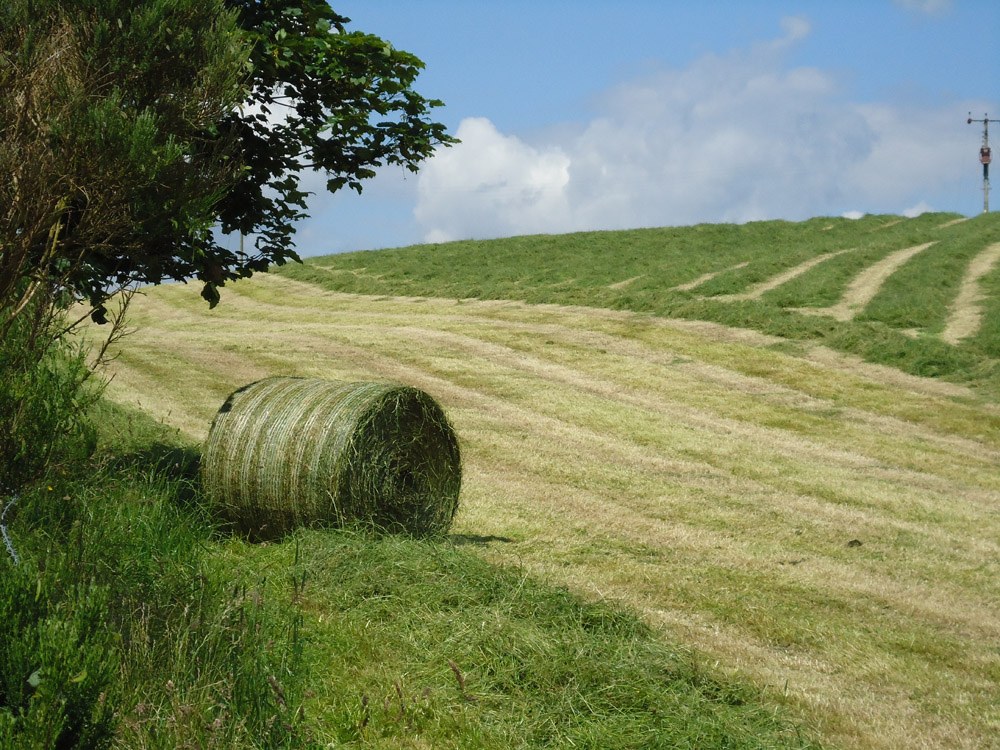 """Featured image for """"3-5 Year Intensive Cutting And Grazing"""""""