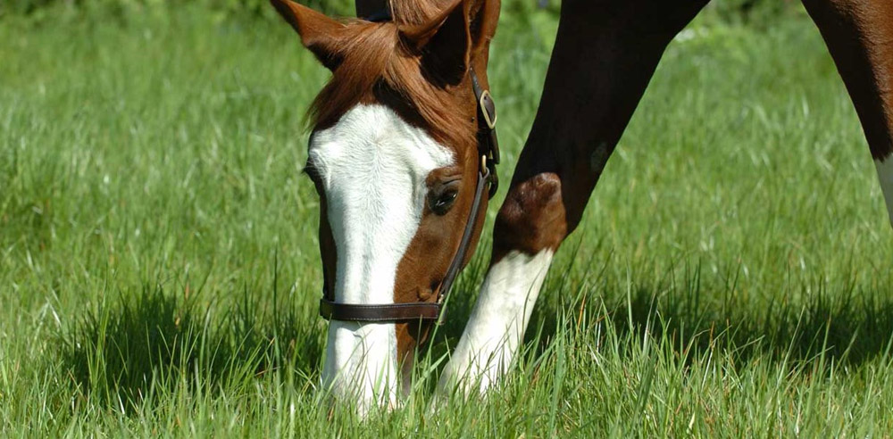 """Featured image for """"Horse & Pony Paddock Mixture"""""""