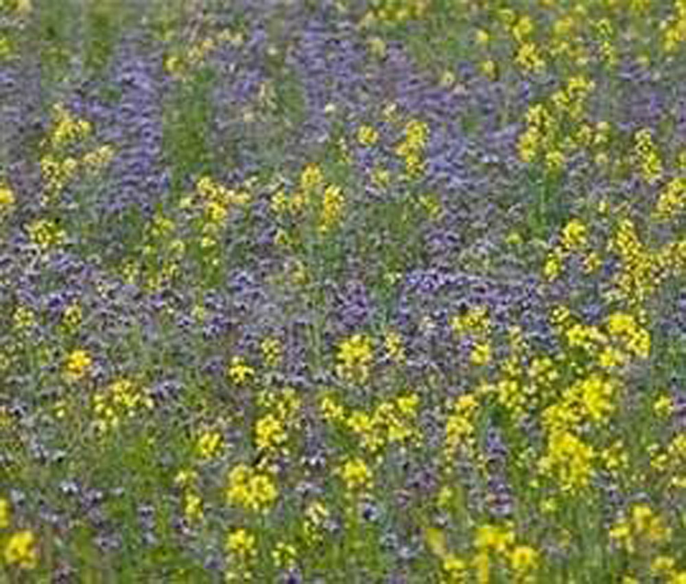 """Featured image for """"EFA Fallow Mix A (Cover Crop)"""""""