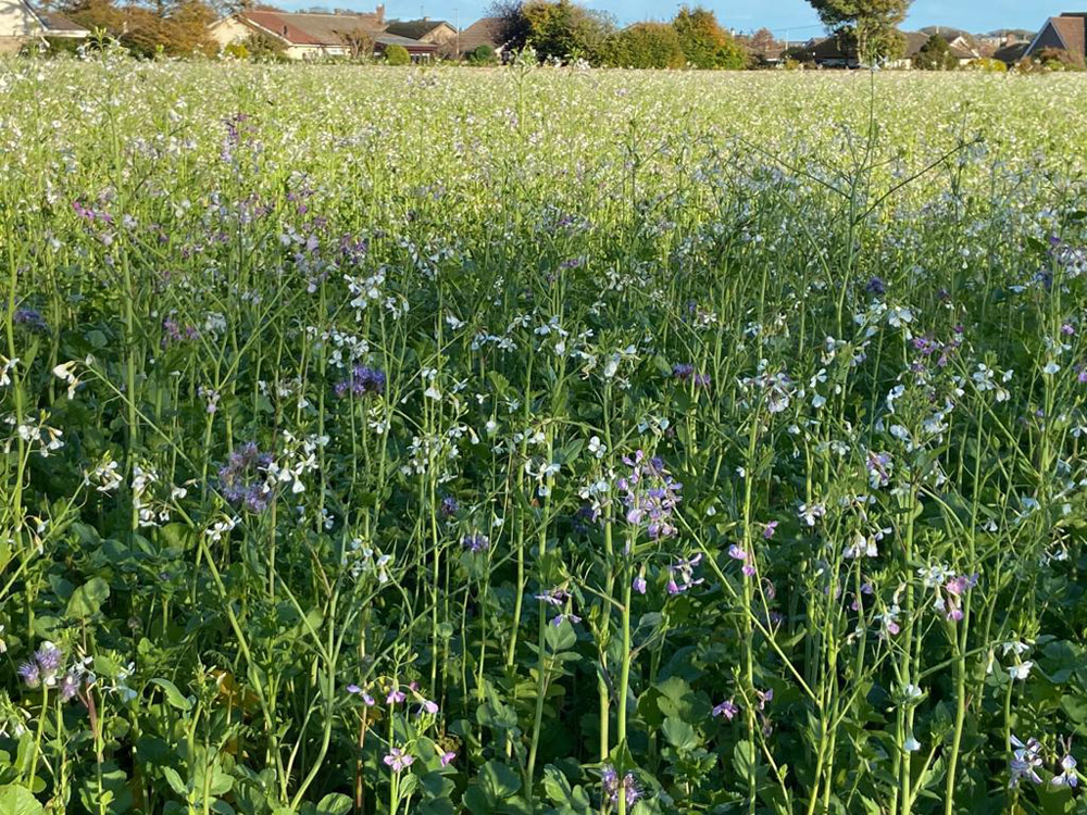 """Featured image for """"EFA Green Mix X (Cover Crop)"""""""